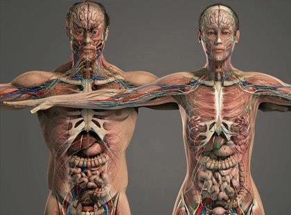 Fisiologia - Noções Gerais
